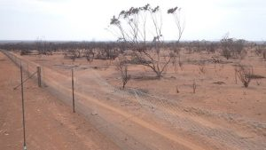 The burnt Mallee Refuge that protects dunnarts and malleefowl