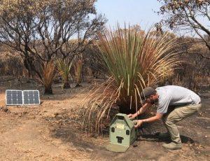 Setting Felixer in dunnart refuge Kangaroo Island